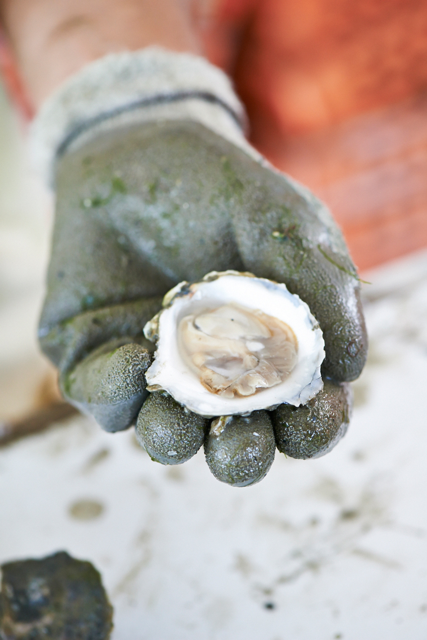 Heath_Robbins_Personal_2013-05-28_Island_Creek_Oysters_Seconds_483