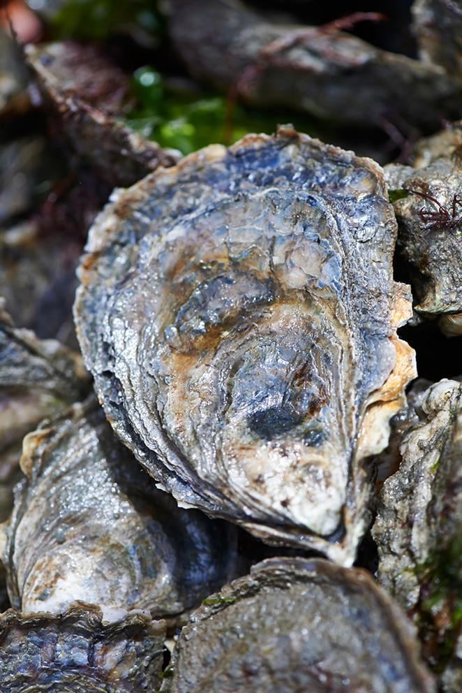 Heath_Robbins_Personal_2013-05-28_Island_Creek_Oysters_Selects_098